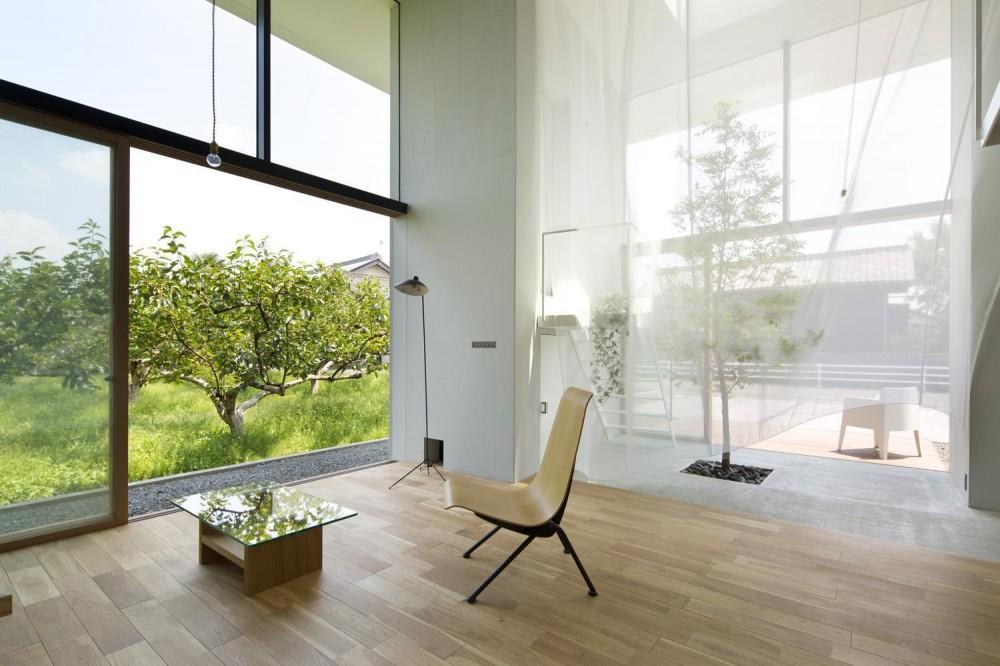 柿畑に囲まれた家 (リビング)