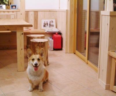 愛犬と暮らす 木の家 (リビング ダイニング)