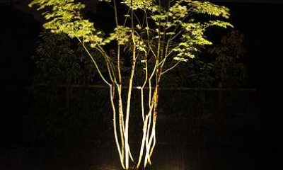 『景色と共に生きる家』〜シンボルツリーが家族をつなぐ二世帯住宅〜