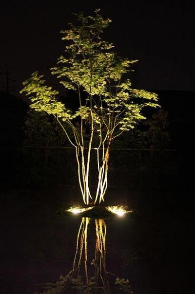 『景色と共に生きる家』〜シンボルツリーが家族をつなぐ二世帯住宅〜 (中庭のシンボルツリー-夜景)