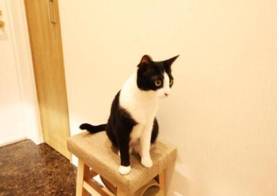 猫 (すっきりと見渡せる、繋がり合うモダンな空間)