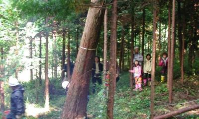 愛犬と暮らす 木の家 (伐採風景)