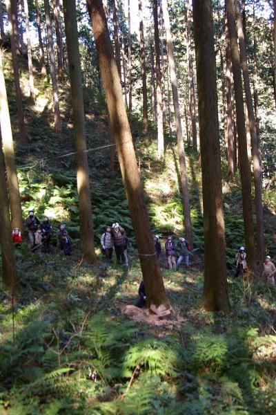 大黒柱の伐採風景 (二世帯の木の家)
