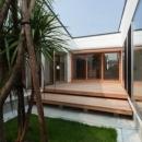 『双方流れの家』2つの片流れ屋根が表情をつくりだす住まいの写真 開放的なテラスとシンボルツリー