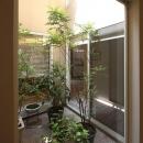 観葉植物で飾る中庭