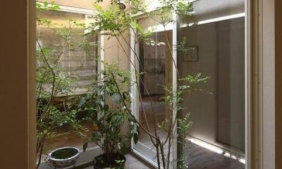 『M邸』4LDKから2世帯住宅へリノベーション (観葉植物で飾る中庭)