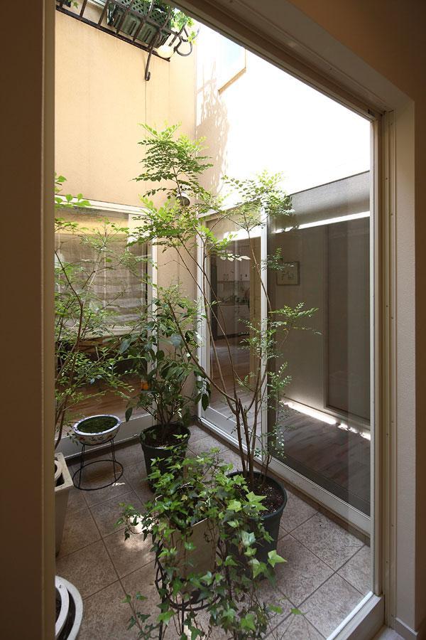 『M邸』4LDKから2世帯住宅へリノベーションの部屋 観葉植物で飾る中庭