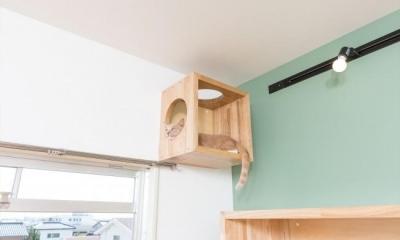 高いところが大好きな猫のための箱|『埼玉県羽生市K邸』猫のための楽園♪賃貸リノベーション