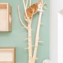 猫の爪研ぎ&キャットタワー