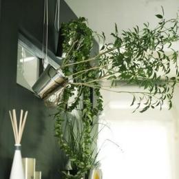 黒板塗装のキッチン壁 (アンティーク&グリーン)