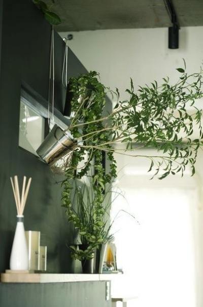 アンティーク&グリーン (黒板塗装のキッチン壁)