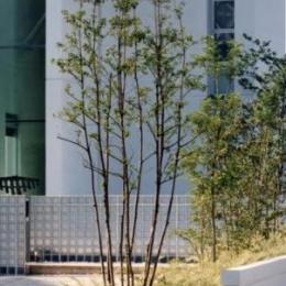 『G-BOX』シンプルモダンスタイリッシュな住まい (ファサードを彩る植栽-2)