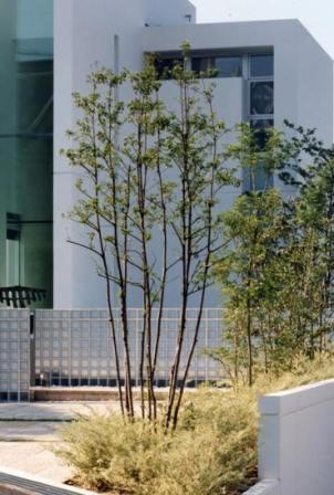 『G-BOX』シンプルモダンスタイリッシュな住まいの写真 ファサードを彩る植栽-2