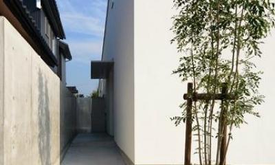 建物脇のアプローチ|『YM-house』光と風を採り込む方流れ屋根の家