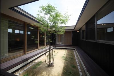 平屋のコートハウス (中庭)