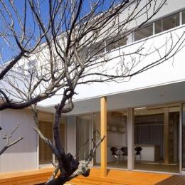 『公園前の家』明るくて風通しの良い住宅 (中庭・デッキ)