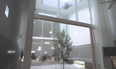 『浮かんだパティオのある家』空中の庭園 (オリーブの植えられた2階パティオ-2)