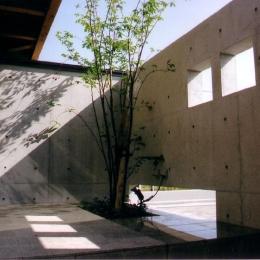 『稲美の家』シンボルツリーのある温かな住まい (アプローチ兼前庭-シンボルツリー)
