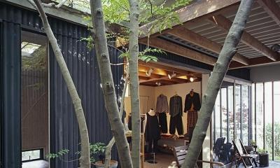 『知多の家』~緑のオアシス~(gallery & dining cafe) (中庭からテラス・ギャラリーへ)