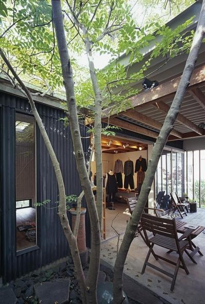 中庭からテラス・ギャラリーへ (『知多の家』~緑のオアシス~(gallery & dining cafe))