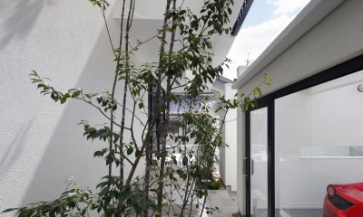 木漏れ日のプールサイドハウス (緑のある前庭・中庭)