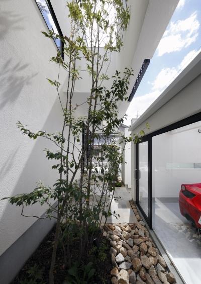 緑のある前庭・中庭 (木漏れ日のプールサイドハウス)