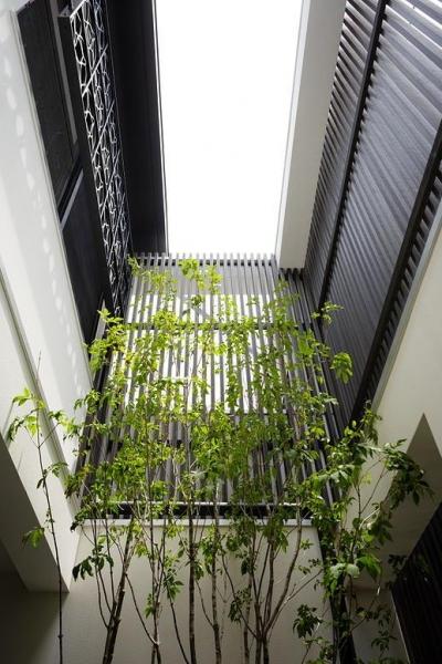 植栽のある中庭 (CAT HOUSE (猫と暮らす家))
