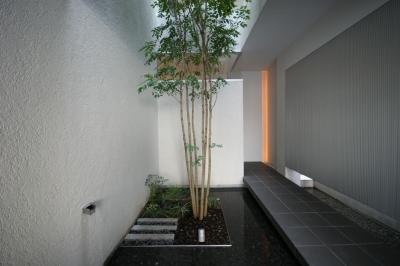HT-HOUSE (シンボルツリーのある中庭)